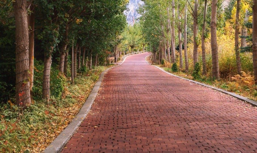 Red brick road through the forest